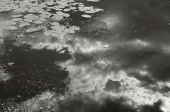 Clouds Reflection in Lilly Pond (frntprchprss) Tags: blackandwhite reflection clouds pond orwellvt