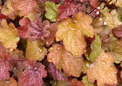 Fougres (32) (Silvia Inacio) Tags: fougres bretagne bretanha brittany france frana rain chuva folha leaf