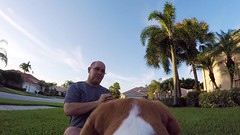 GoPro Brody (Don Burkett) Tags: beagle brody dog hound puppy pet animal outdoors gopro hero4