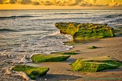 Green Rocks (Photography By Steve daPonte) Tags: carlinpark ocean rocks seascape sunrise