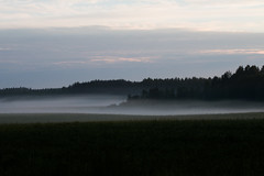 Pelto (Tyylim) Tags: usva mist field dawn