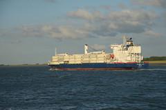 Colombian Star DST_8373 (larry_antwerp) Tags: reefer africaexpressline ael colombianstar 9172480 schip ship vessel        schelde