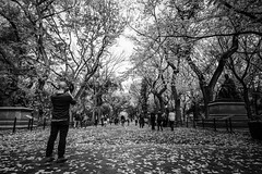 Autumn in New York (Marcela McGreal) Tags: nyc newyorkcity newyork manhattan centralpark mall fall autumn otoo parque blackandwhite bnw blackwhite bw blancoynegro blanconegro bn byn blanco negro black white noiretblanc noirblanc noir blanc biancoenero bianco nero bianconero pretobranco pretoebranco preto branco schwarzundweis schwarz weis