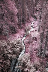 _MG_1900 (Simone Villani 6D) Tags: canon eos 6d fullframe ff 24105l torrente water infrared infrarosso forest