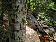 Lye Brook Hike, Manchester VT (Boston Runner) Tags: falls trail hike summer 2016 manchester vermont lyebrook wilderness carve initials tree trunk waterfall