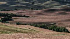 Earthwaves (marco soraperra) Tags: landscape hills field grass light waves shadow nikon nikkor d750 valdorcia