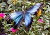 K46A8106 (Yvonne23021984) Tags: schmetterling butterfly hamm germany deutschland maxipark markro photography macrophotography canon canonphotography markofotografy canoneos7dmarkii insects insekten nature naturfotografie naturephotography closeup colorkey schmetterlinge butterflies