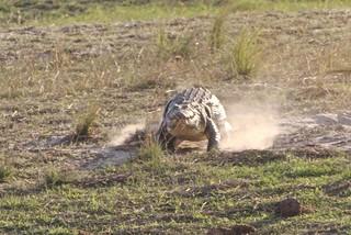 Namibia Dangerous Game Safari - Caprivi Strip 37