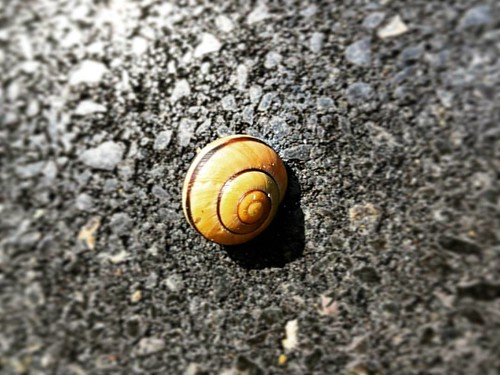 Wall decoration (aka living scenery) #snail #animal #ajax