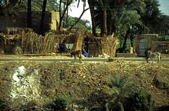 gypten 1999 (355) Theben West (Rdiger Stehn) Tags: strase menschen leute dorf afrika gypten egypt nordafrika 1999 winter urlaub dia analogfilm scan slide 1990er obergypten 1990s sdgypten diapositivfilm analog kbfilm aad kleinbild canoscan8800f canoneos500n 35mm luxor misr