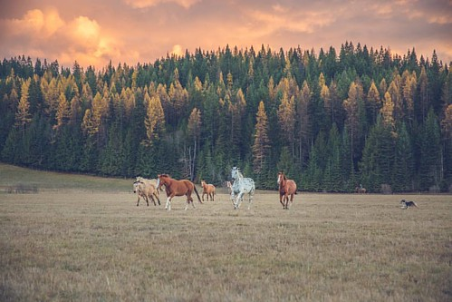 Welcome first day of fall! It's time for wood fires, colors changing, horses with wooly coats, wild rag scarves and wool socks. I love the changes of season in North Idaho,  but fall may be my favorite.   #wpguestranch #visitidaho #duderanch #guestranch #