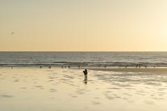 Pops on the beach (Keartona) Tags: filey bay beach yorkshire sand sea morning horizon birds seabirds gulls shore england