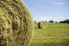 Big Bale (DustinJ05) Tags: leica m typ240 50mm f14 f1 summilux wide open hay field sky grass fence twine string wire