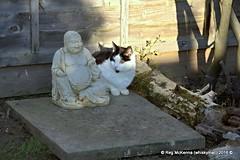 DSC_4908.NEF - Vinnie on Archie's Grave (whiskymac) Tags: vinnie pets cats feline animals domesticcats