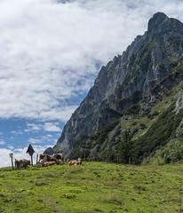 Cows @ Alps (LichtCatchingToby) Tags: sony alpha a6300 6300 emount mirrorless nex selp18105g alps alpen kuh cow cows khe natur berge berg hiking wandern tour kalkalpen sky