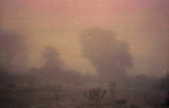 Morning Mist (On Film - Expired 2005) (Balticson) Tags: mist fog morningmist teignmouth devon