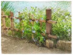 At the water's edge, Morikami Gardens (Solly Avenue) Tags: landscape garden painterlyapp ipadpainting ipadsketching impressionism digitalphotoart travel photomanipulation painterly gardens