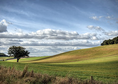 Tree near Sparsholt, Hampshire, UK (neilalderney123) Tags: 2016neilhoward winchester landscape england hampshire tree cloud rural 2016neilhoward
