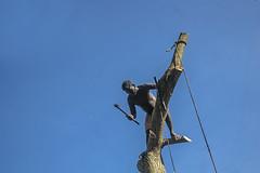 The Feller of Trees - 1,  Cochin, Kerala (Anoop Negi) Tags: kerala india cochin thavera thevera toddy tapper ezhava tree cutter blue sky axe portrait working minimal photo anoop negi ezee123