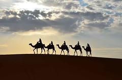 2011.08.24 07.03.20.jpg (Valentino Zangara) Tags: camel desert flickr morocco silhouette mtis meknstafilalet marocco ma