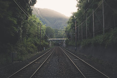 (skidu) Tags: railroad mist nature rain japan forest train canon kyoto tracks sigma bamboo 30mm 550d t2i