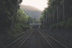 (skidu) Tags: railroad mist nature rain japan forest train canon kyoto tracks sigma bamboo 30mm 550d t2i
