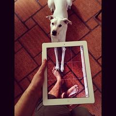 #dog #ipad #jobs (ricardinho) Tags: dog valencia square jobs  squareformat 4s iphone transparentscreens ipad doisoito iphoneography instagram instagramapp uploaded:by=instagram wwwricardojaegercombr