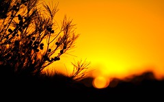 Golden Sunset (missgeok) Tags: lighting trees light red sky orange sun abstract black nature composition spectacular gold scenery colours shadows bokeh sydney silhouettes australia goldensunset bokehlicious coloursofsunset branchessilhouette
