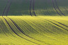 Green Lines (Irene Becker) Tags: morning sunrise landscape spring europe land czechrepublic cz skalka moravia morava českárepublika èeskárepublika jihomoravský bestcapturesaoi irenebecker irenebeckerorg
