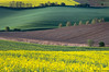 Springtime (Irene Becker) Tags: flowers yellow landscape spring europe sundown land czechrepublic cz skalka moravia morava colza českárepublika repce èeskárepublika jihomoravský irenebecker irenebeckerorg