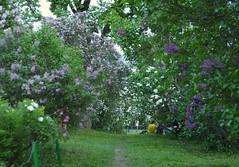 Ботанический сад (Киев 2012) (Sasha_mac) Tags: park trees people grass nikon kiev киев 18105 ukrain люди парк трава d90 украина деревья
