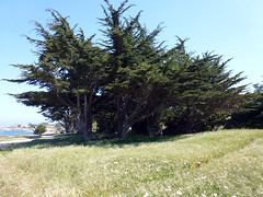 Pacific Grove 5-7-12 (24) (Photo Nut 2011) Tags: pacificgrove california monterey berwickpark