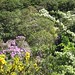 Gorse, Rhododendron and Whitethorn