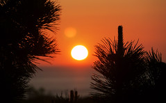 BREAK OF DAY (craftedfromtheheart) Tags: sea orange sun hot home nature pinetree photoshop sunrise dawn mediterranean cliffs northernireland derry daybreak castlerock northatlanticocean straightoutofthecamera sooc cs5 colondonderry amandakillen heatwavebutnotlikewhatiamusedtoinaustralia gbukcraftedfromtheheart