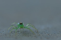 Female Magnolia Green Jumper