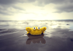 I want to be a real crab (Paul O' Connell) Tags: ireland sea dublin beach water canon fun toy outdoors photography coast sand creative crab lowtide concept pauloconnell rubbercrab