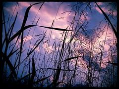 grass (~Bella189) Tags: sunset storm grass clouds olympus challengeyouwinner 15challengeswinner favescontestwinner friendlychallenges thepinnaclehof agcgmegachallengewinner agcgcrèmedelacrèmewinner agcgsweepwinner agcgcrèmeofthecropchallengewinner transcendingsweepschallengewinner olympustg820 tphofweek168