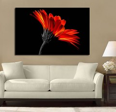 Fire Daisy (Simply Canvas Art) Tags: art wallart flowerart homedecoration flowerprints flowercanvas flowerwallart flowercanvasprints flowercanvasart flowercanvaswallart