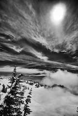 North of Paradise (TroyMasonPhotography) Tags: blackandwhite snow cold tree nature landscape snowshoe washington paradise cloudy hiking fineart hike mountrainier mtrainier piercecounty sigma1020 troymason