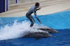 Blue Horizons Show (Seals4Reals) Tags: show blue orlando florida dolphin seaworld horizons