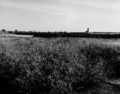 isola sacra e il vecchio faro, fiumicino (levantina) Tags: tmax fiumicino mamiya645e isolasacra sekor80mm28 cartabaritata rolleivintage stampabn
