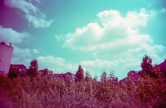 Think pink ... (Skley) Tags: berlin film analog germany photography photo xpro foto fotografie cross creative picture commons cc creativecommons processing bild licence kreativ crossentwicklung lizenz blackslimdevil skley dsk250712 dennisskley
