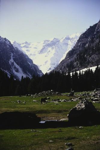 Lidderwat Valley, Kashmir