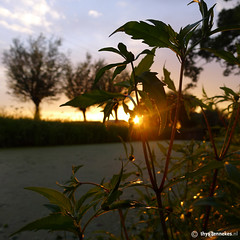 Sunset in august (Thijs Tennekes) Tags: sunset sky sun plant holland tree green nature water netherlands nederland august thijs thys stolwijk tennekes