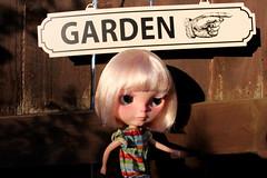 132/365 Garden, this way!