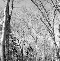 Winter_Walk_Halifax_2015_2 (Herb) Tags: agfaapx100 caffenolc