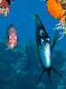 Looking for Dory (altsaint) Tags: 45mm egypt gf1 hurghada panasonic redsea redseabannerfish redstripedsquirrelfish fish underwater dory