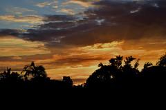 Magical (Dreaming of the Sea) Tags: nikon d7200 dusk trees twilight sunset tamron bluesky 2016 tamronsp2470mmf28divcusd palmtrees yellowsunset redsunset blackcloud bundaberg blue silhouette mangotree clouds nikonpasson 500v20f nikonclubit 1500v60f