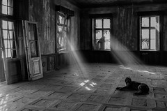 Guard. (Tomasz Aulich) Tags: abandoned decay urbex urbanexploration indoor dog sunlight sun guard floor windows door wood poland nikon travel mirror glass monochrome blackandwhite manor explorer architecture building europe rust