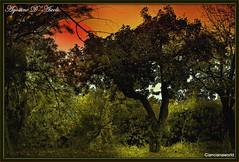Autunno in full color - Settembre-2016 (agostinodascoli) Tags: autunno fullcolor nikon nikkor cianciana sicilia sunset tramonto alberi foglie piante paesaggi nature texture agostinodascoli photoshop art digitalart digitalpainting photopainting